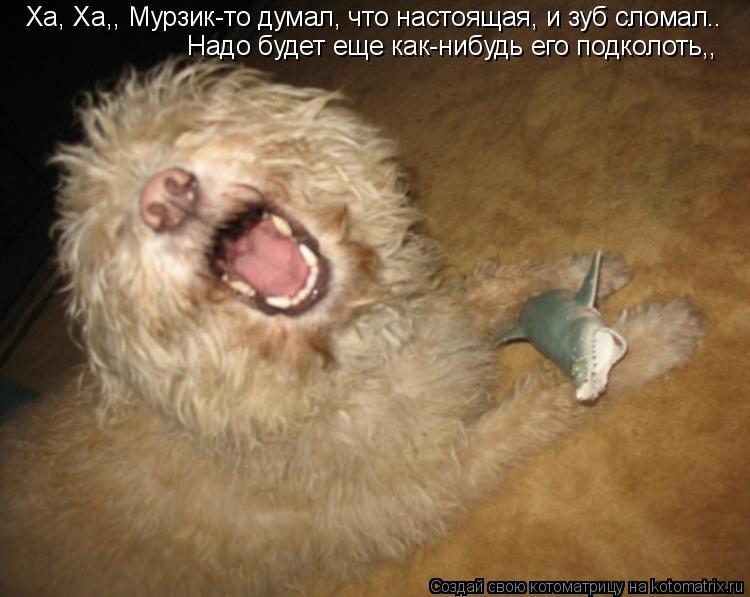 Котоматрица: Ха, Ха,, Мурзик-то думал, что настоящая, и зуб сломал.. Надо будет еще как-нибудь его подколоть,,