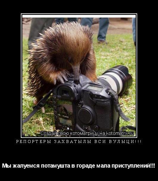 Котоматрица: Репортеры захватылы вси вулыци!!! Мы жалуемся потамушта в гораде мала приступлений!!!