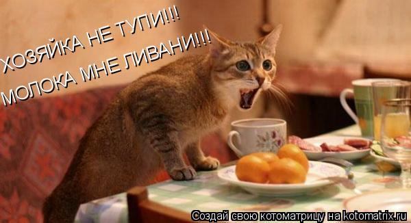 Котоматрица: ХОЗЯЙКА НЕ ТУПИ!!! МОЛОКА МНЕ ЛИВАНИ!!!