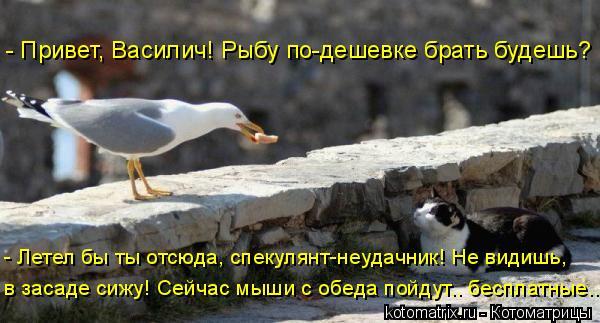 Котоматрица: - Привет, Василич! Рыбу по-дешевке брать будешь? - Летел бы ты отсюда, спекулянт-неудачник! Не видишь, в засаде сижу! Сейчас мыши с обеда пойдут