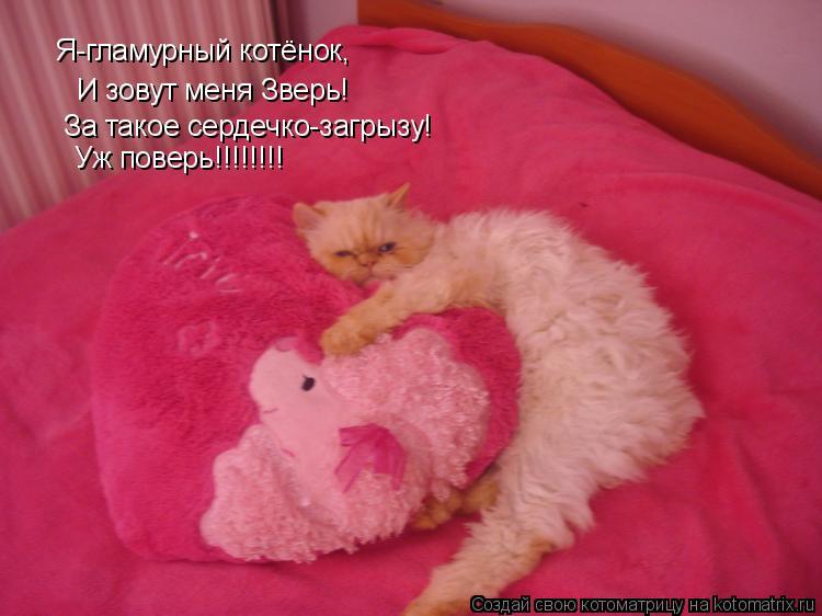 Котоматрица: Я-гламурный котёнок, И зовут меня Зверь! За такое сердечко-загрызу! Уж поверь!!!!!!!!