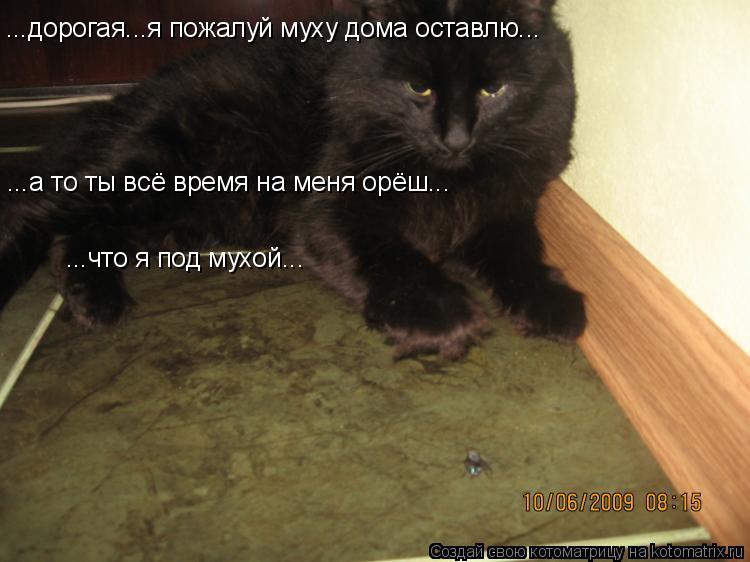 Котоматрица: ...дорогая...я пожалуй муху дома оставлю... ...а то ты всё время на меня орёш... ...что я под мухой...