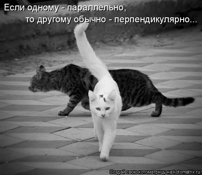 Котоматриця!)))) - Страница 5 QH