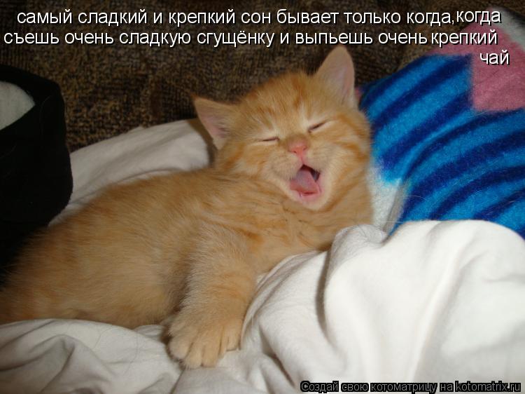 Котоматрица: самый сладкий и крепкий сон бывает только когда ,когда съешь очень сладкую сгущёнку и выпьешь очень  крепкий чай