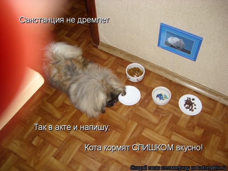 Котоматрица: Санстанция не дремлет Так в акте и напишу: Кота кормят СЛИШКОМ вкусно!