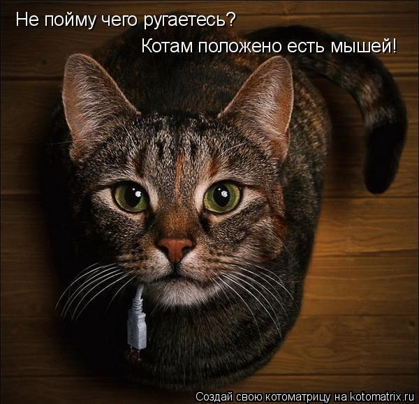 Котоматрица: Не пойму чего ругаетесь? Котам положено есть мышей!