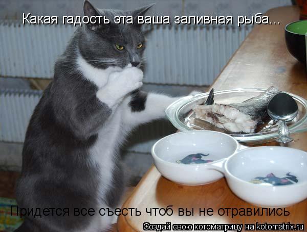 Котоматрица: Какая гадость эта ваша заливная рыба... Придется все съесть чтоб вы не отравились