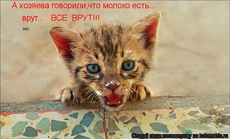 Котоматрица: А хозяева говорили,что молоко есть... врут...   ВСЕ  ВРУТ!!!