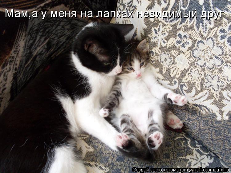 Котоматрица: Мам,а у меня на лапках невидимый друг
