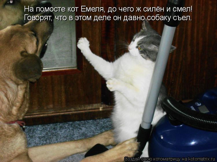 Котоматрица: На помосте кот Емеля, до чего ж силён и смел! Говорят, что в этом деле он давно собаку съел.