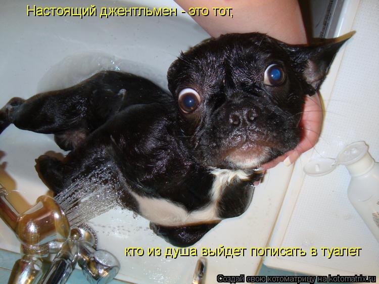 Котоматрица: Настоящий джентльмен - это тот, кто из душа выйдет пописать в туалет