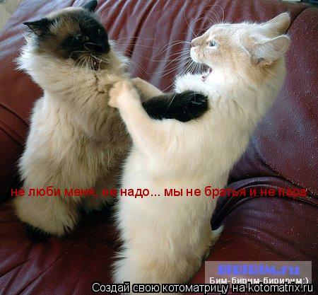 Котоматрица: не люби меня, не надо... мы не братья и не пара не люби меня, не надо... мы не братья и не пара