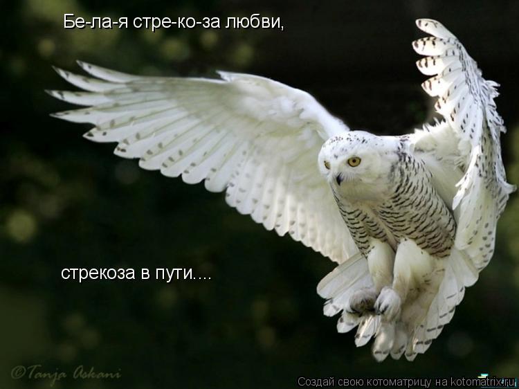 Котоматрица: Бе-ла-я стре-ко-за любви, стрекоза в пути....