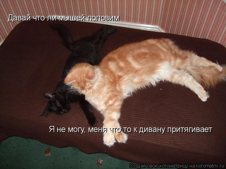 Котоматрица: Давай что ли мышей половим Я не могу, меня что то к дивану притягивает