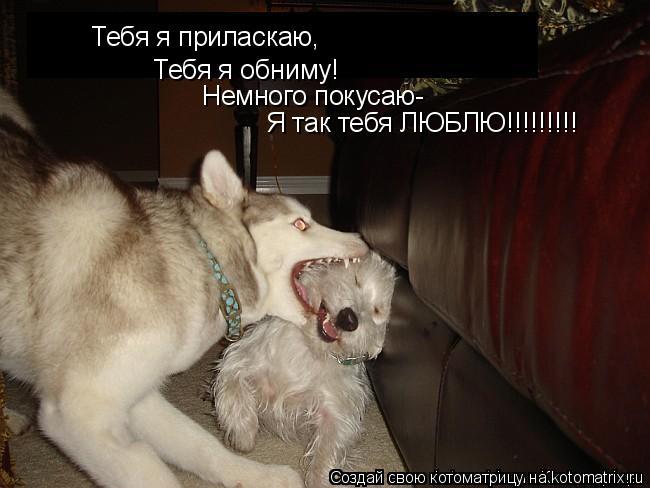 Котоматрица: Тебя я приласкаю, Тебя я обниму! Немного покусаю- Я так тебя ЛЮБЛЮ!!!!!!!!!