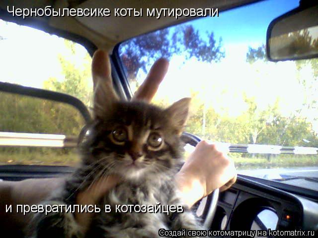 Котоматрица: Чернобылевсике коты мутировали и превратились в котозайцев