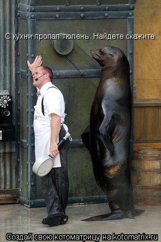 Котоматрица: С кухни пропал тюлень. Найдете скажите.