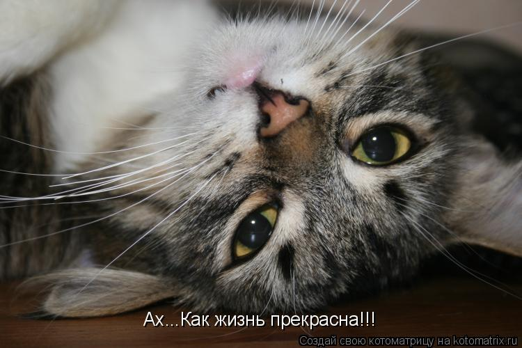Котоматрица: Ах...Как жизнь прекрасна!!!