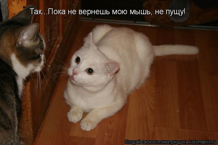 Котоматрица: Так...Пока не вернешь мою мышь, не пущу!