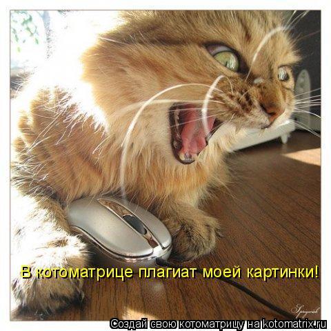 Котоматрица: В котоматрице плагиат моей картинки!