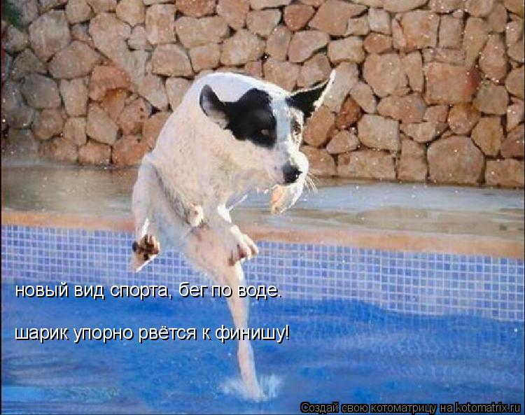 Котоматрица: новый вид спорта, бег по воде. шарик упорно рвётся к финишу!