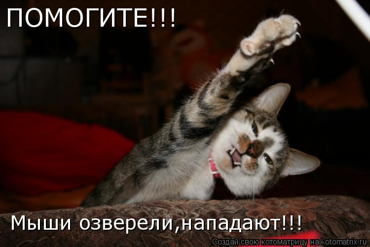 Котоматрица: ПОМОГИТЕ!!! Мыши озверели,нападают!!!