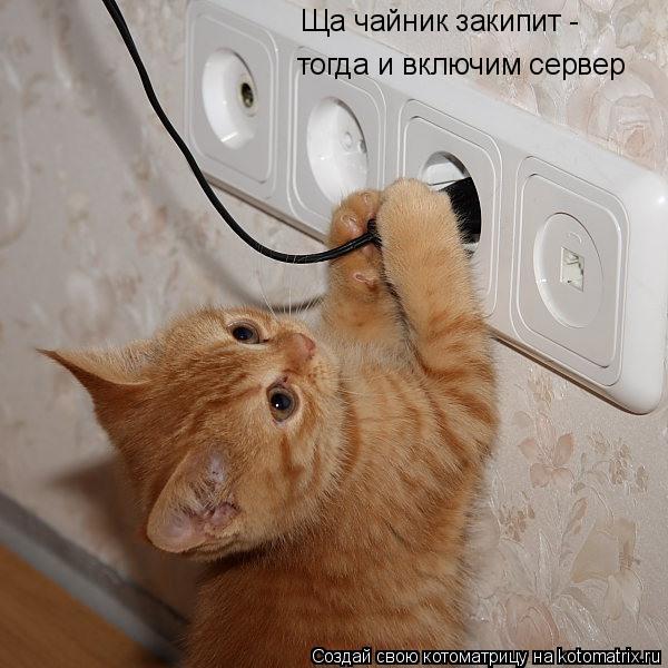 Котоматрица: Ща чайник закипит -  тогда и включим сервер