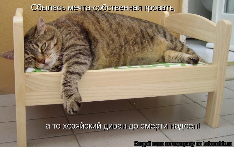 Котоматрица: Сбылась мечта-собственная кровать, а то хозяйский диван до смерти надоел!