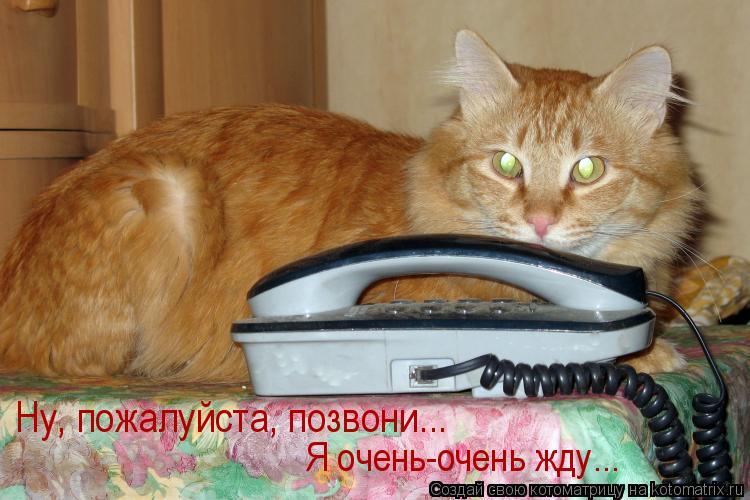 Котоматрица: Ну, пожалуйста, позвони... Я очень-очень жду...