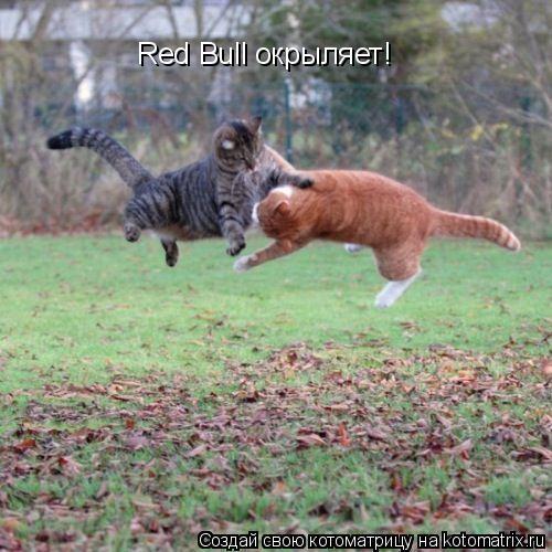 Котоматрица: Red Bull окрыляет!