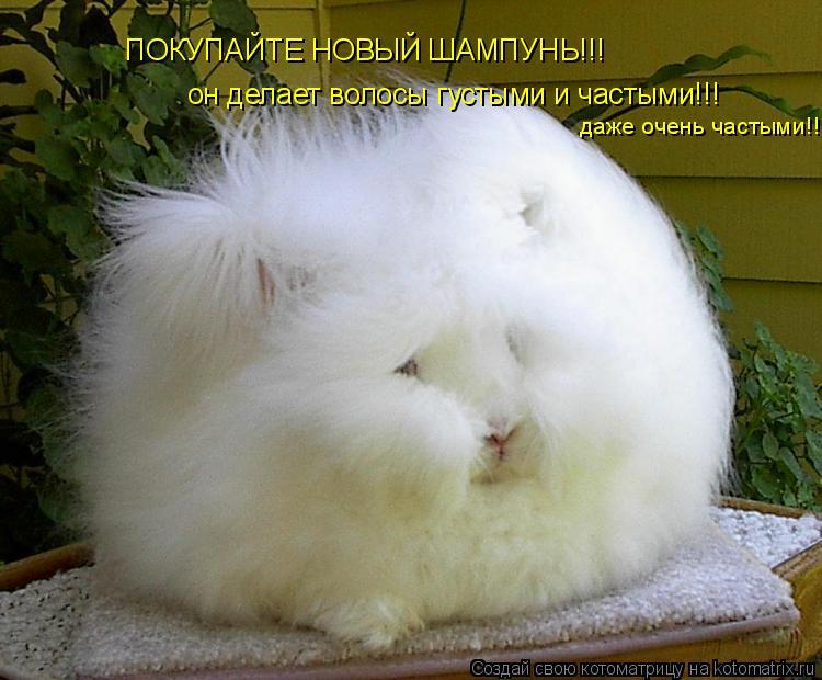 Котоматрица: ПОКУПАЙТЕ НОВЫЙ ШАМПУНЬ!!! ПОКУПАЙТЕ НОВЫЙ ШАМПУНЬ!!! он делает волосы густыми и частыми!!! даже очень частыми!!!