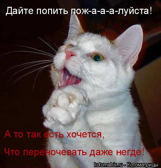 Котоматрица: Дайте попить пож-а-а-а-луйста! А то так есть хочется, Что переночевать даже негде!