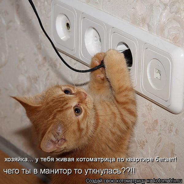 Котоматрица: хозяйка... у тебя живая котоматрица по квартире бегает! чего ты в манитор то уткнулась??!!