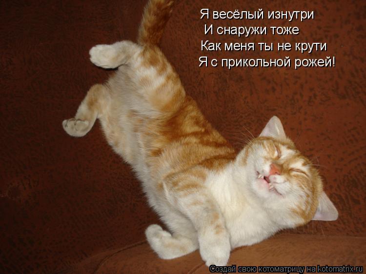 Котоматрица: Я весёлый изнутри И снаружи тоже Как меня ты не крути Я с прикольной рожей!