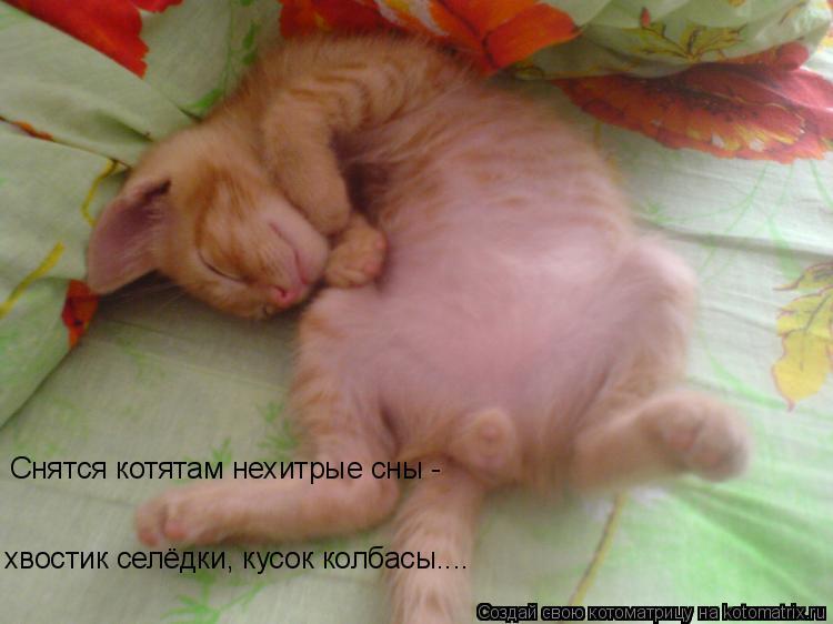Котоматрица: Снятся котятам нехитрые сны - хвостик селёдки, кусок колбасы....