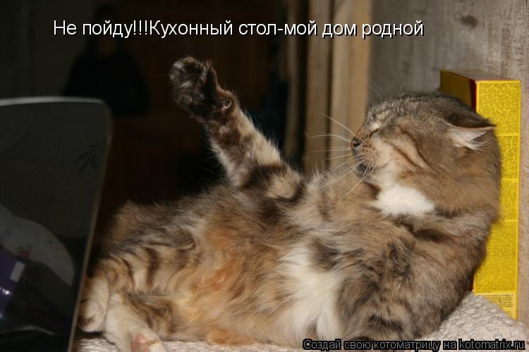 Котоматрица: Не пойду!!!Кухонный стол-мой дом родной