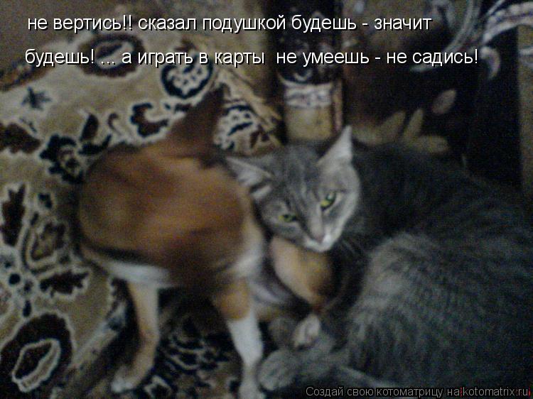 Котоматрица: не вертись!! сказал подушкой будешь - значит  не вертись!! сказал подушкой будешь - значит  будешь! ... а играть в карты  не умеешь - не садись!