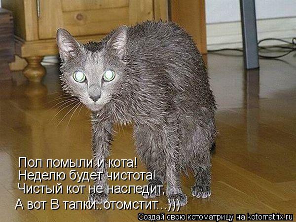 Котоматрица: Пол помыли и кота! Неделю будет чистота! Чистый кот не наследит, А вот В тапки..отомстит...)))