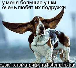 Котоматрица: у меня большие ушки очень любят их подружки