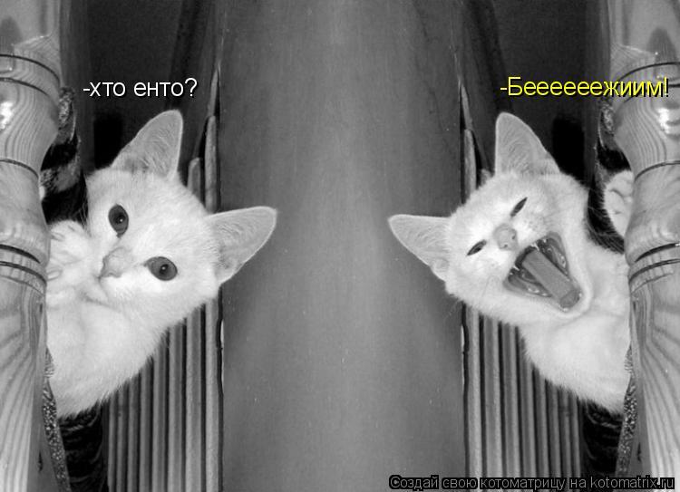Котоматрица: -хто енто? -Беееееежиим!