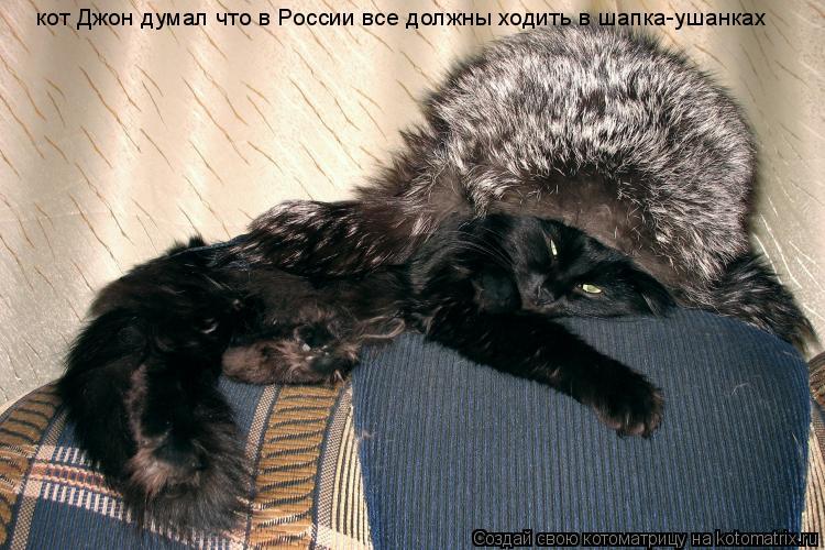 Котоматрица: кот Джон думал что в России все должны ходить в шапка-ушанках