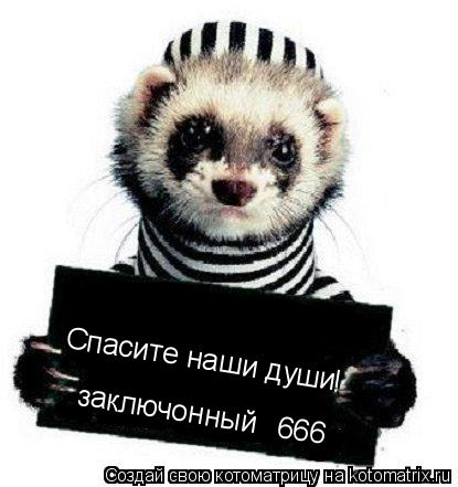 Котоматрица: Спасите наши души № заключонный 666 !