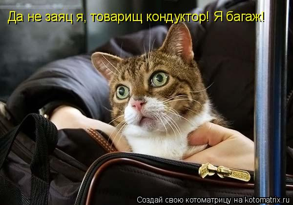 Котоматрица: Да не заяц я, товарищ кондуктор! Я багаж!