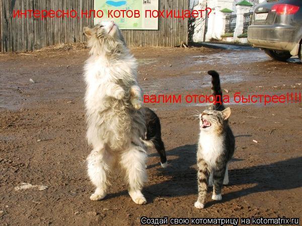 Котоматрица: интересно,нло котов похищает? валим отсюда быстрее!!!!