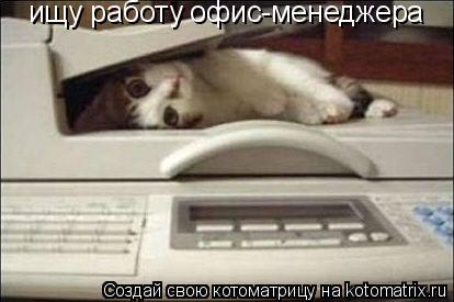 Котоматрица: ищу работу офис-менеджера