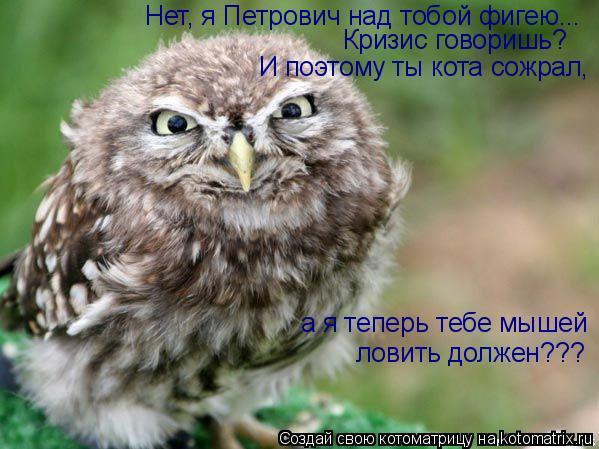 Котоматрица: Нет, я Петрович над тобой фигею... Кризис говоришь? И поэтому ты кота сожрал, а я теперь тебе мышей ловить должен???