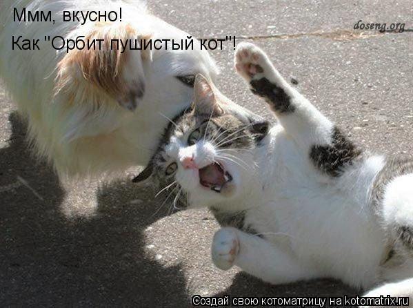 """Котоматрица: Ммм, вкусно! Как """"Орбит пушистый кот""""!"""