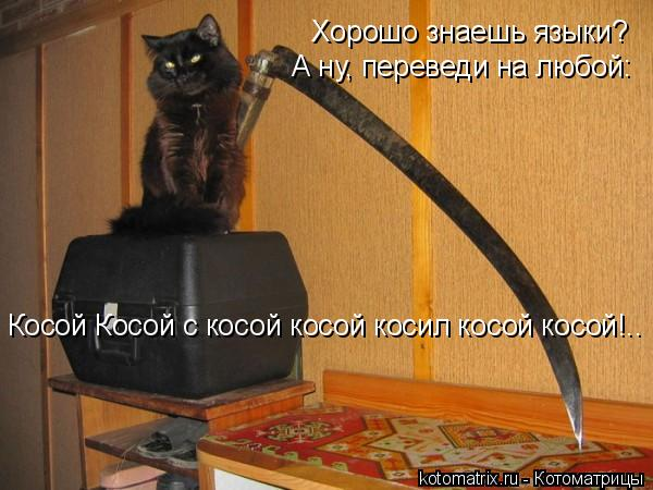 Котоматрица: Хорошо знаешь языки? А ну, переведи на любой: Косой Косой с косой косой косил косой косой!..