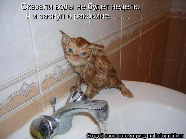 Котоматрица: Сказали воды не будет неделю я и заснул в раковине.........