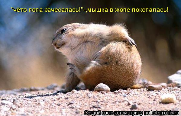 "Котоматрица: ""чёто попа зачесалась!""-,мышка в жопе покопалась!"